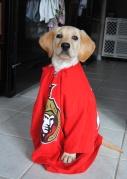 dressed a dog up